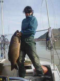 Ecología de peces